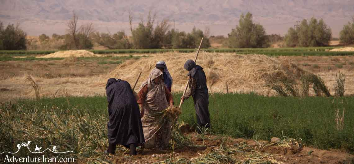 Iran Agriculture and Natural Resources